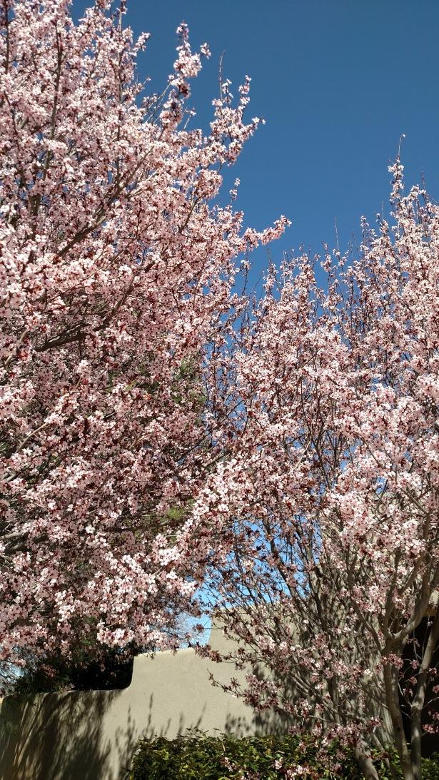 For Blog 22 Mar
